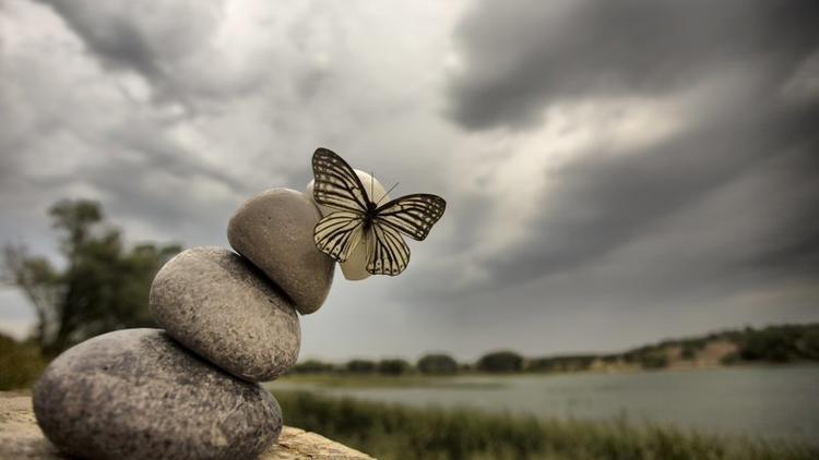 Kelebeklerin Ömrü 1 Gün Müdür? galerisi resim 10