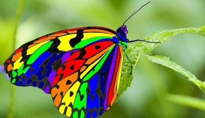 Kelebeklerin Ömrü 1 Gün Müdür? galerisi resim 11