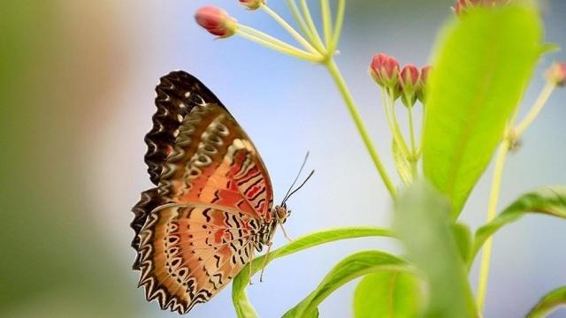 Kelebeklerin Ömrü 1 Gün Müdür? galerisi resim 12
