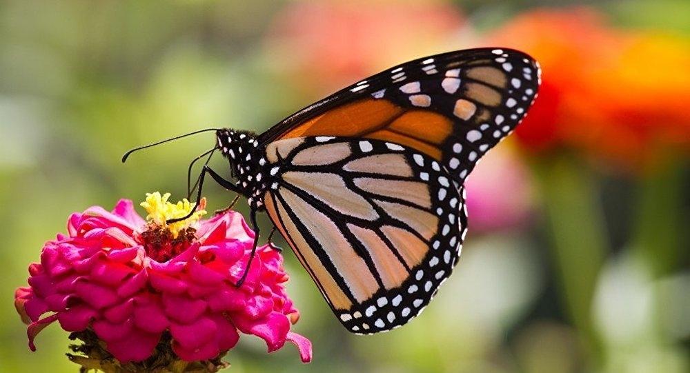 Kelebeklerin Ömrü 1 Gün Müdür? galerisi resim 13