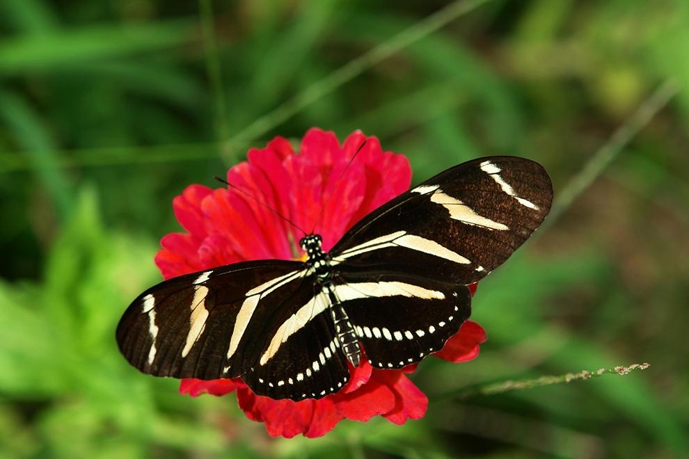 Kelebeklerin Ömrü 1 Gün Müdür? galerisi resim 14