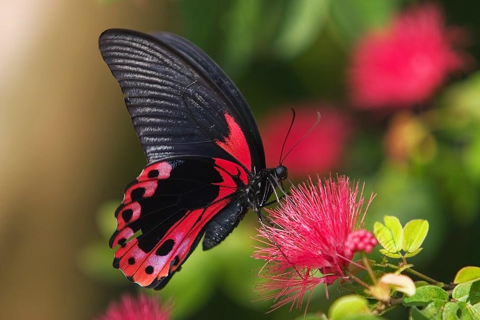 Kelebeklerin Ömrü 1 Gün Müdür? galerisi resim 15