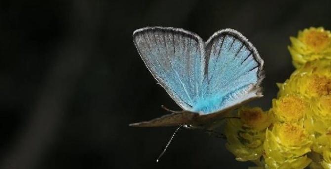 Kelebeklerin Ömrü 1 Gün Müdür? galerisi resim 2