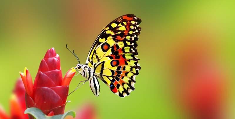 Kelebeklerin Ömrü 1 Gün Müdür? galerisi resim 3