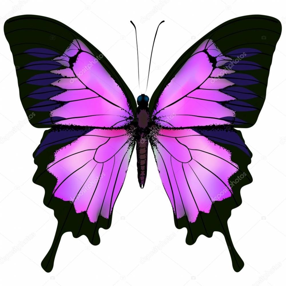 Kelebeklerin Ömrü 1 Gün Müdür? galerisi resim 5