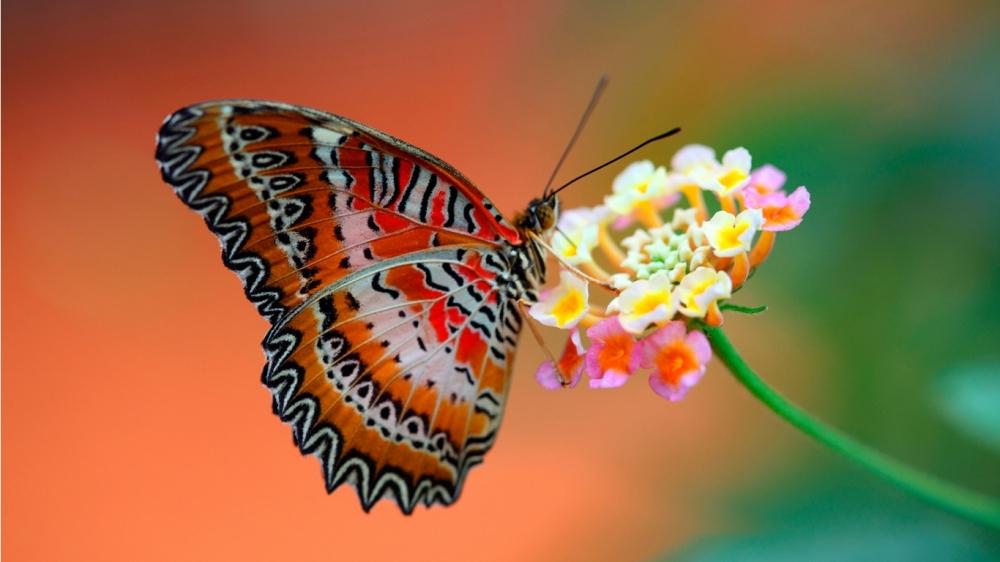Kelebeklerin Ömrü 1 Gün Müdür? galerisi resim 7