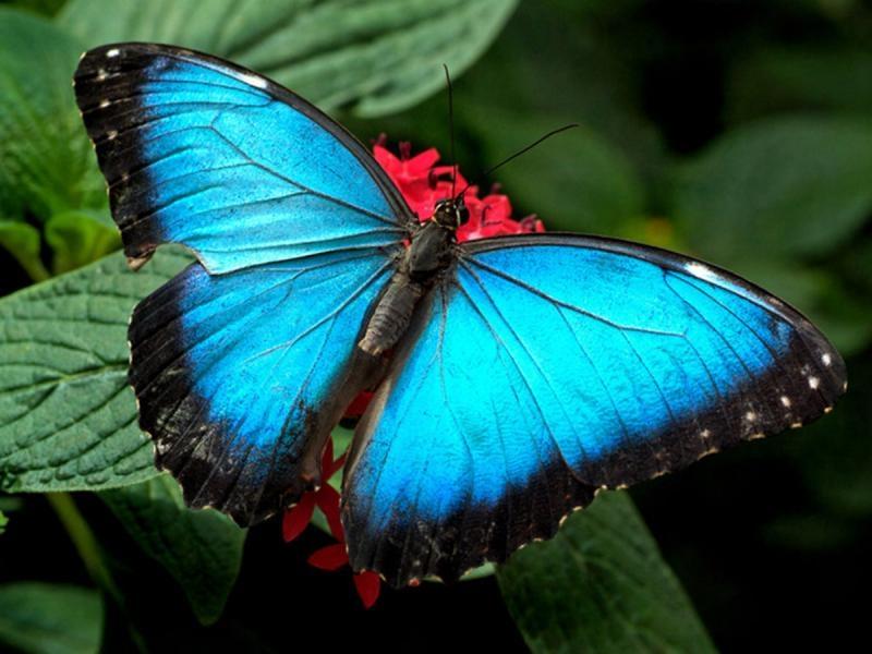 Kelebeklerin Ömrü 1 Gün Müdür? galerisi resim 8