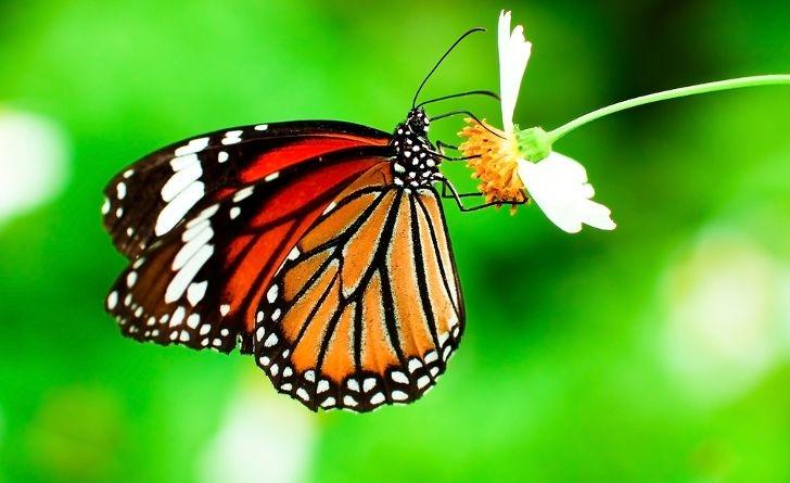 Kelebeklerin Ömrü 1 Gün Müdür? galerisi resim 9
