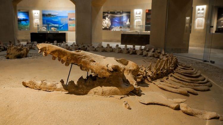 Çölde Balina fosilleri bulundu ! galerisi resim 2