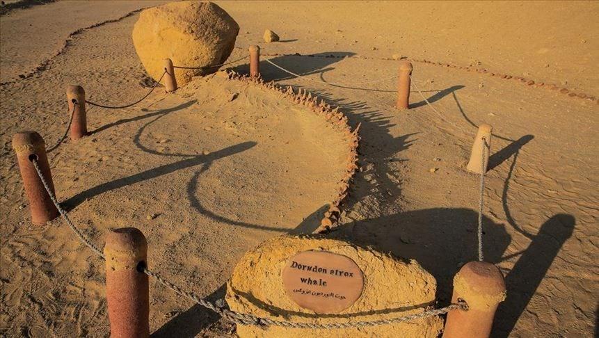 Çölde Balina fosilleri bulundu ! galerisi resim 7