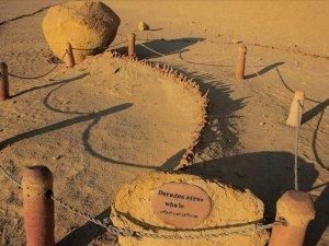 Çölde Balina fosilleri bulundu !