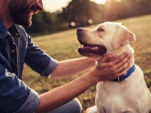 Bilim İnsanları: Köpekler Sakallı Erkeklerden Daha Temiz