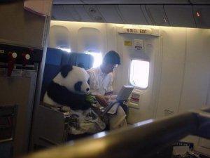 Bir yolcu uçağında karşılaşabileceğiniz en garip durumlar