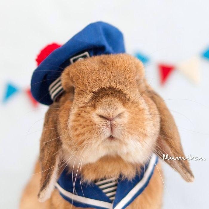 Dünya'nın en stil tavşanı ile tanışın: PuiPui galerisi resim 1