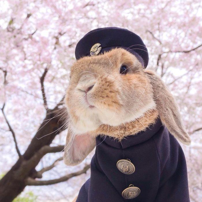 Dünya'nın en stil tavşanı ile tanışın: PuiPui galerisi resim 10