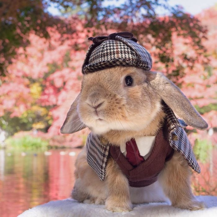 Dünya'nın en stil tavşanı ile tanışın: PuiPui galerisi resim 11