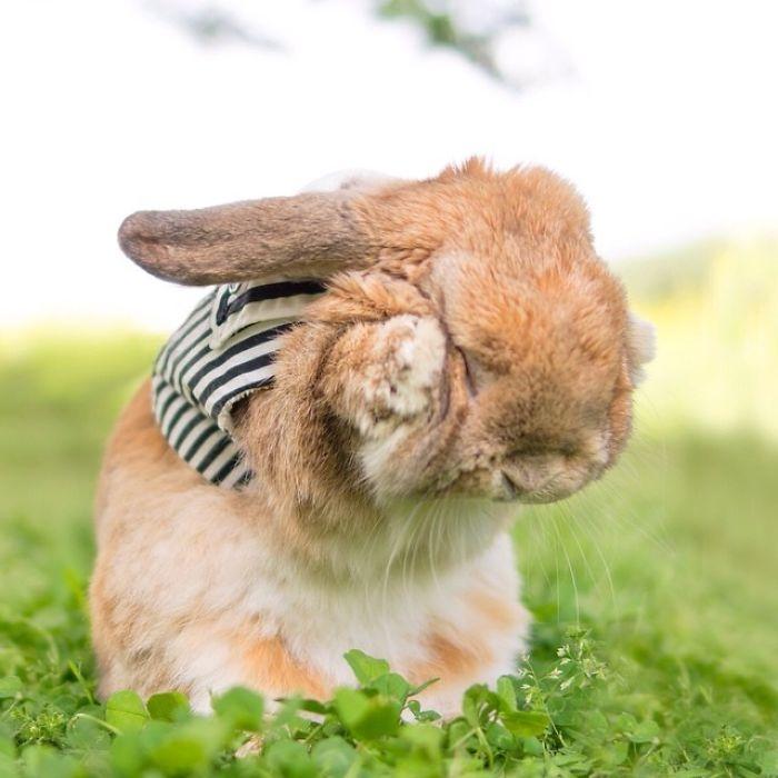 Dünya'nın en stil tavşanı ile tanışın: PuiPui galerisi resim 2