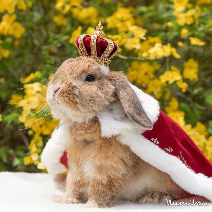 Dünya'nın en stil tavşanı ile tanışın: PuiPui galerisi resim 4