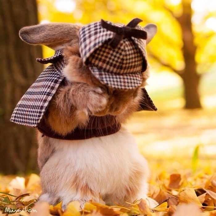 Dünya'nın en stil tavşanı ile tanışın: PuiPui galerisi resim 5