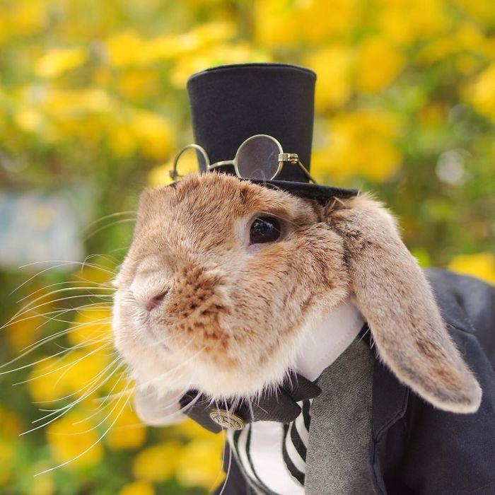 Dünya'nın en stil tavşanı ile tanışın: PuiPui galerisi resim 6