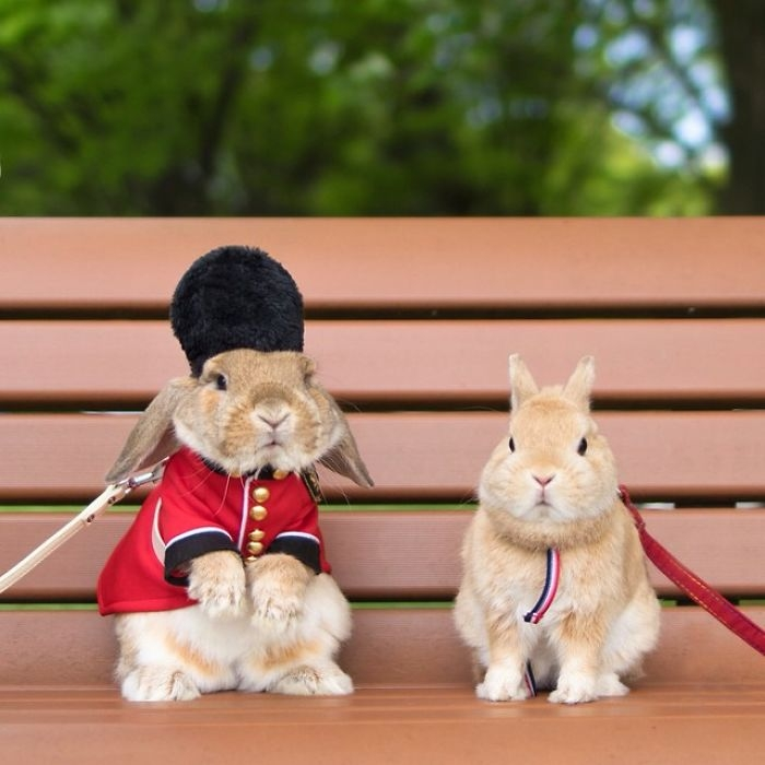 Dünya'nın en stil tavşanı ile tanışın: PuiPui galerisi resim 7