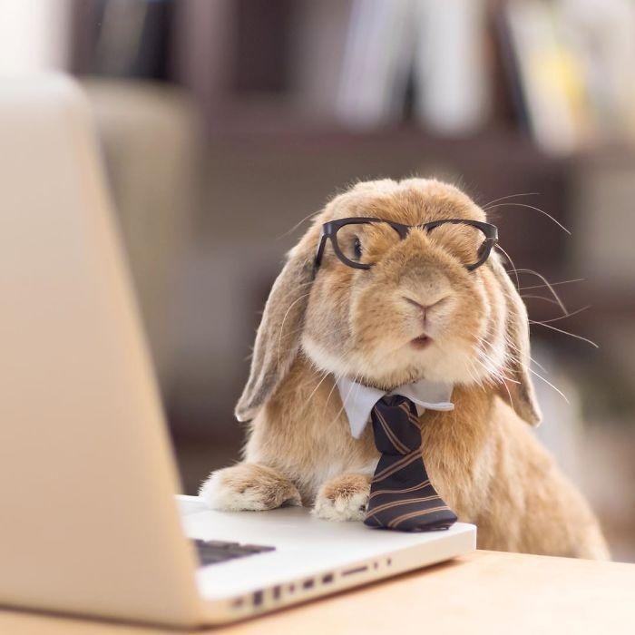 Dünya'nın en stil tavşanı ile tanışın: PuiPui galerisi resim 8