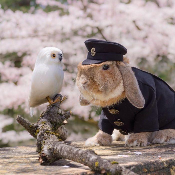 Dünya'nın en stil tavşanı ile tanışın: PuiPui galerisi resim 9