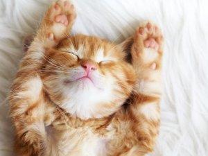 Sıcak havalarda rahat uyuyabilmek  neler yapılabilir?