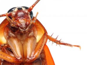 Hamam Böceğinden Kurtulmanın En Doğal Yolları