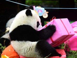 18 yaşına giren Pandaya çılgın doğum günü süprizi!