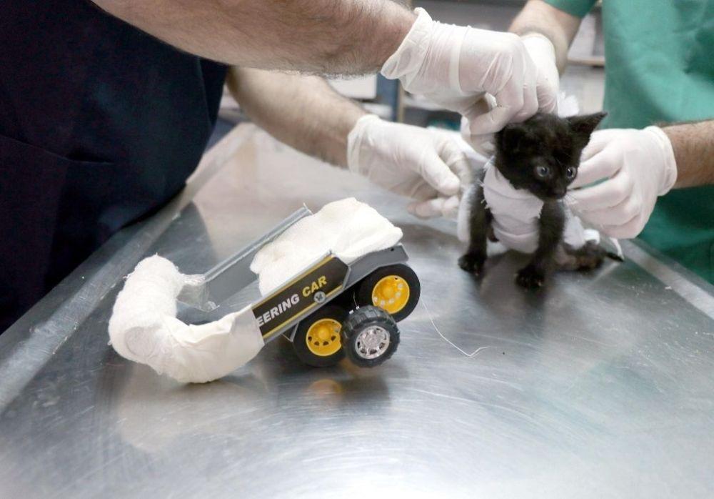 Arka bacakları tutmayan kediye oyuncak kamyondan yürüteç yapıldı galerisi resim 1
