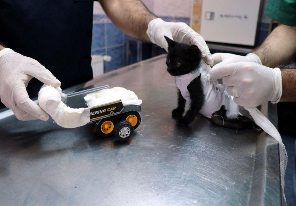 Arka bacakları tutmayan kediye oyuncak kamyondan yürüteç yapıldı galerisi resim 2