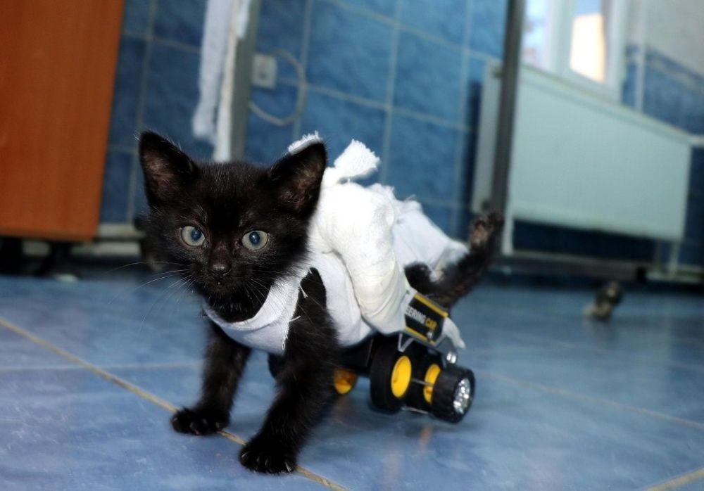 Arka bacakları tutmayan kediye oyuncak kamyondan yürüteç yapıldı galerisi resim 6