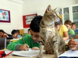 Derslere giren kedi 'Tarçın' teneffüslerde de yavrularıyla ilgileniyor
