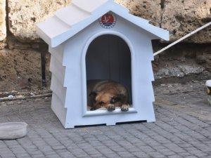Girne Belediyesi köpeklerle ilgili çalışmalarını sürdürüyor