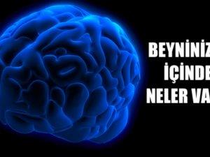 Beyninizin içinde ne var? Nasıl çalışıyor?