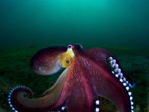Okyanus'un altından ödüllü fotoğraflar