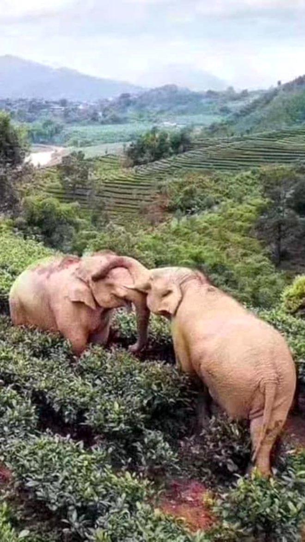 Filler litrelerce alkollü içecek içerek sızıp kaldı galerisi resim 3