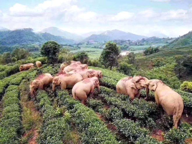 Filler litrelerce alkollü içecek içerek sızıp kaldı galerisi resim 4