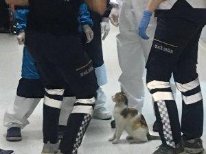 Anne kedi hasta yavrusunu acile götürdü