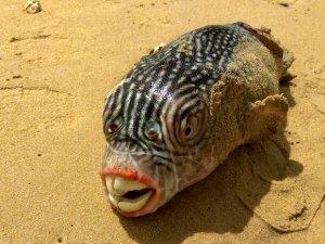 Rus balıkçının denizden çıkardığı ilginç canlılar