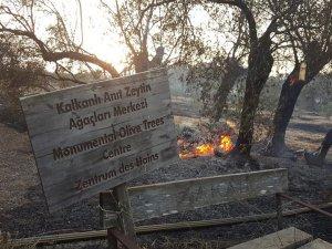 Yangında anıt ağaçlar da yandı!