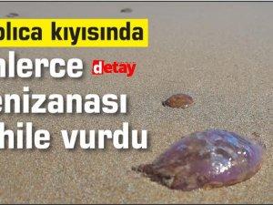 Kaplıca kıyısında binlerce zehirli Denizanası sahile vurdu