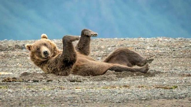 İşte en komik doğa fotoğrafları galerisi resim 1