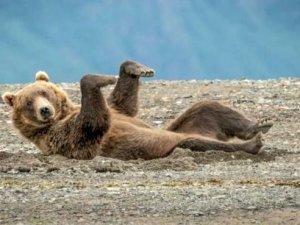 İşte en komik doğa fotoğrafları