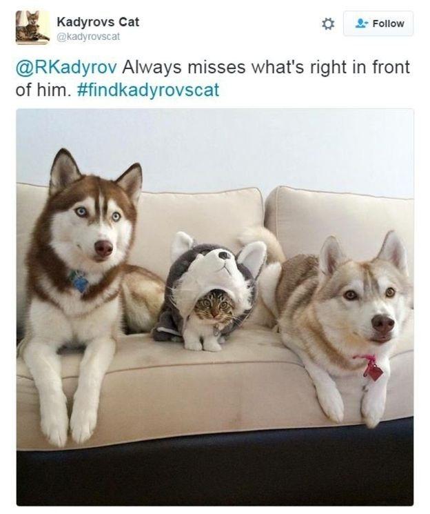 Çeçen liderin kayıp kedi ilanı alay konusu oldu galerisi resim 4