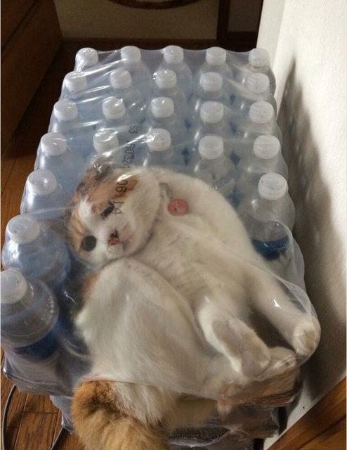 Adeta sıvı gibiler!İşte kedilerin her yere sığabileceğinin kanıtı! galerisi resim 1