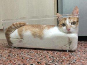 Adeta sıvı gibiler!İşte kedilerin her yere sığabileceğinin kanıtı!