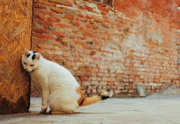 Evcil hayvanınız bunları yapıyorsa dikkat! galerisi resim 10