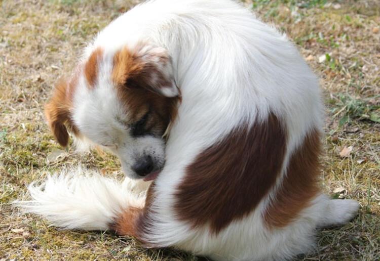Evcil hayvanınız bunları yapıyorsa dikkat! galerisi resim 4